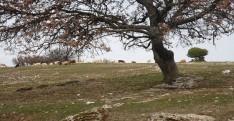 Çanakkale Köy Turu