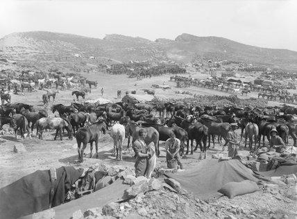 Anafartalar 1915
